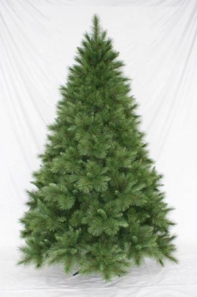 Vánoční stromek LONGNEEDLE PINE